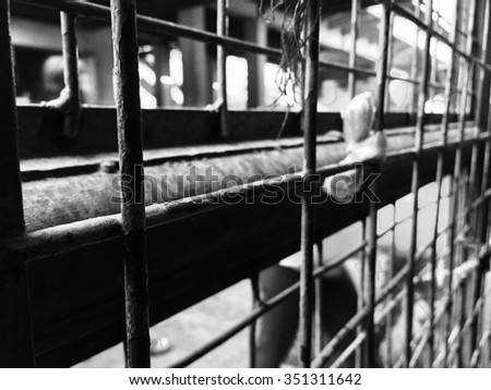 Black and White Cage