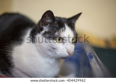 Black and white cat in shelter - stock photo