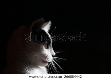Black and white cat is isolated a black background. portrait - stock photo