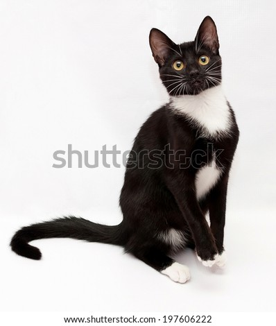 Black and white cat is standing on its hind legs, on gray-white background - stock photo