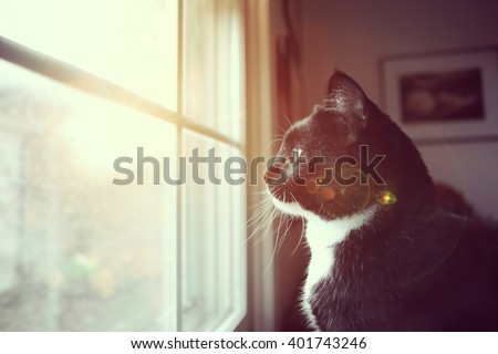 Black and white cat looking through a dirty window to the outside, lens flare, Instagram filter - stock photo