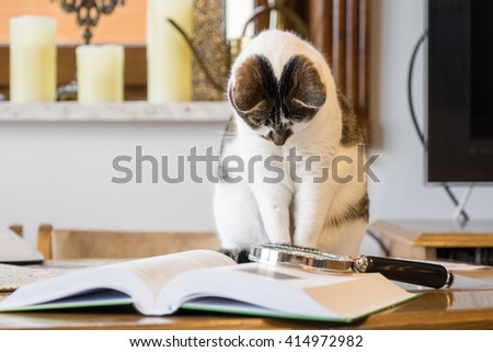 black and white cat reading a book  - stock photo