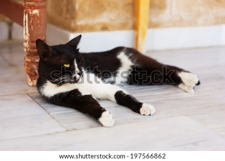 Black and white cat relaxing outdoor