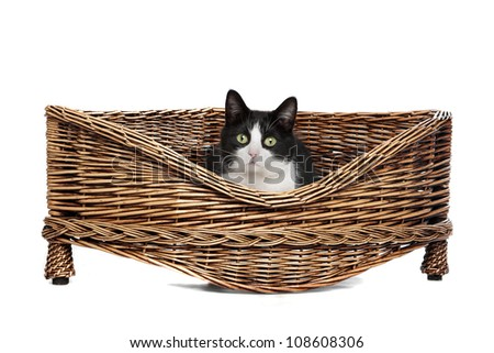 Black and white cat resting in a wicker bed - stock photo