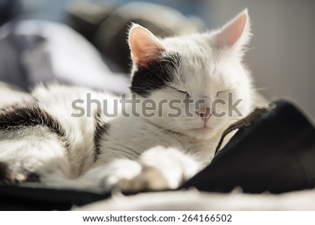 Black and white cat resting on a bed - stock photo