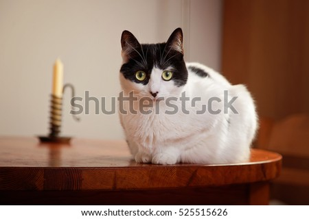 Black and White cat sitting on the table