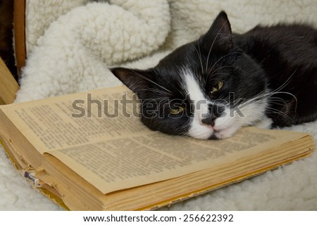 black and white cat sleeping in a chair on the old book - stock photo