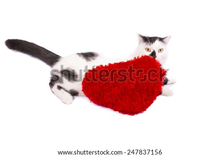 black and white cat with a red heart pillow on a white background