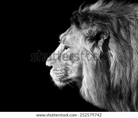 Lion Portrait Stock Images, Royalty-Free Images & Vectors ...