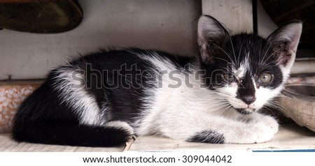 Black and white cute kitten, selective focus on its eye, lay under outdoor shelf