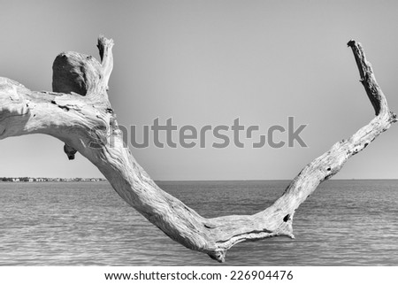 black and white driftwood branch with ocean background - stock photo