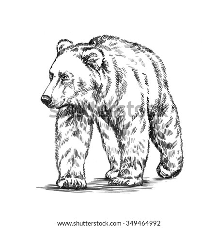 black and white engrave isolated bear - stock photo