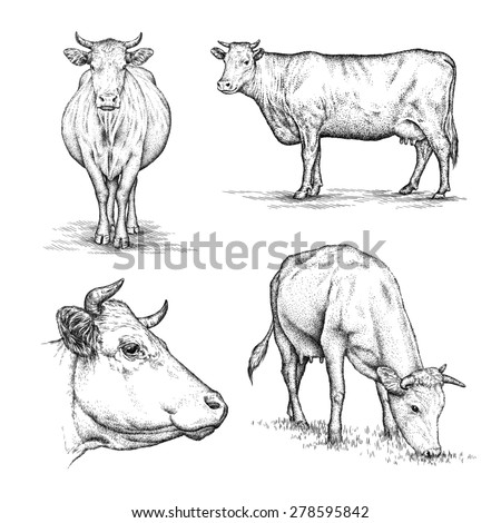 black and white engrave isolated cow - stock photo