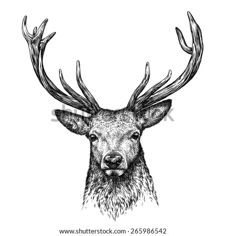 black and white engrave isolated deer - stock photo