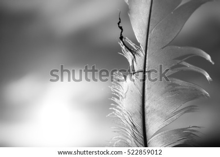 Black and white feather in sunshine