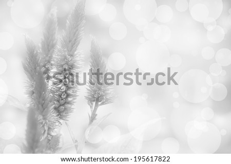 Black and white flowers background , - stock photo