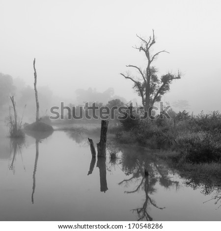 Black and white, Forest swamp scene - stock photo