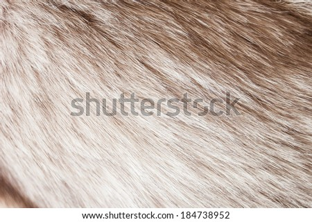 black and white fur - stock photo