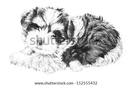 black and white hand drawn puppy dog picture, adorable puppy dog sketch isolated on white background for vet, pet grooming salon, veterinarian pet care or pet shop business card clip art, brochure ads - stock photo