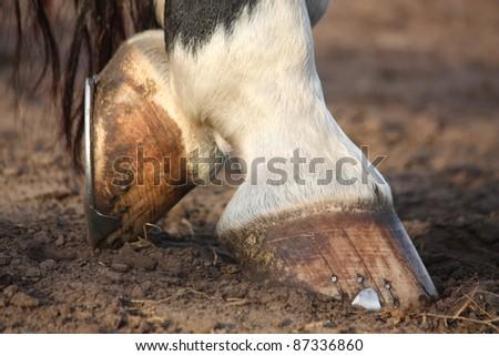 Black and white horse hoofs with horseshoe - stock photo
