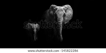 Black and white image of a Mother and Baby Elephant - stock photo