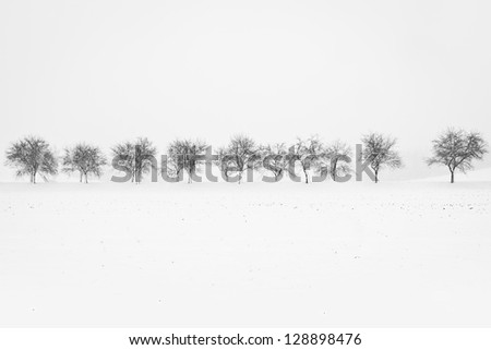 Black and white image of alley of trees during snowstorm - stock photo