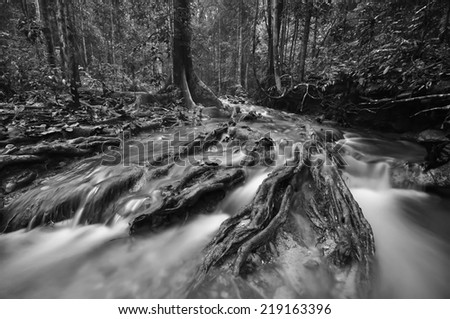 Black and white image of The equator green jungle and rain forest  with trees and bushes , clean and cool fresh water river flows through cascades stones and roots  - stock photo