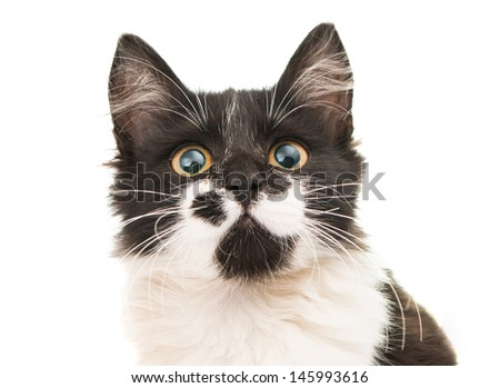 black and white kitten isolated on white background - stock photo