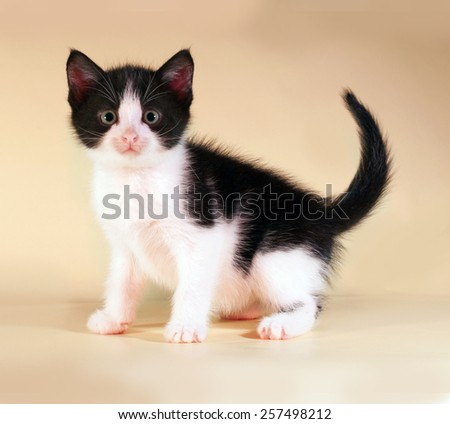 Black and white kitten sitting on yellow background