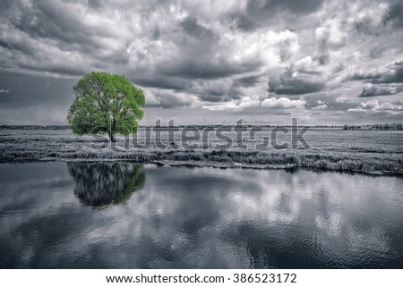 black and white landscape and green tree - stock photo