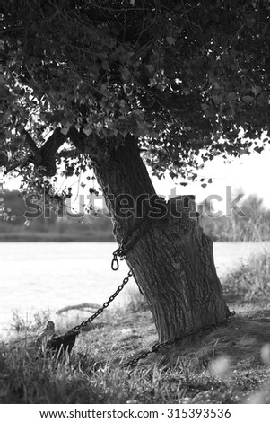 black and white landscape with a lone tree - stock photo