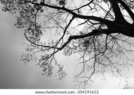 black and white leaf of tree - stock photo