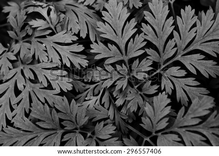black and white leaves background - stock photo