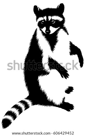 black and white linear paint draw raccoon illustration