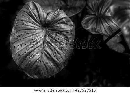 Black and white low key nature backgroundabstract textured plants leaves for decorative