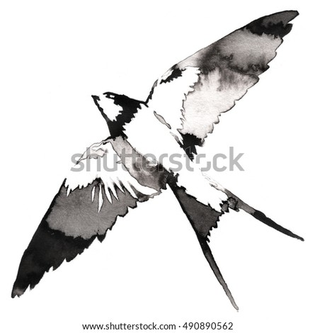 how to draw a swallow bird