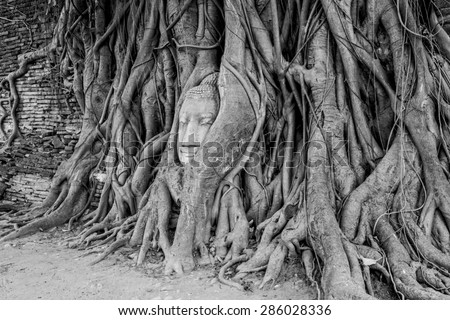 Black and white of Head of Buddha statue in the tree roots at Wat Mahathat temple, Ayutthaya, Thailand. - stock photo