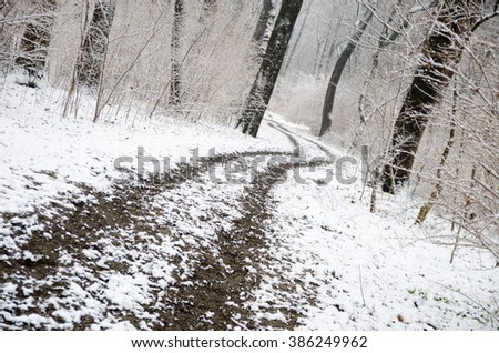 Black And White Path in Winter Forrest With Snow