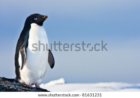 black and white penguin on the white snow
