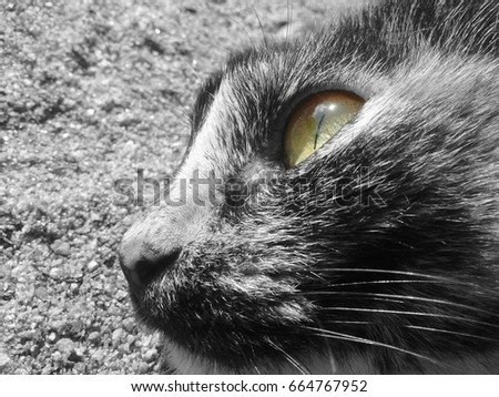 black and white photo of a cat's face contrasting with its green eyes
