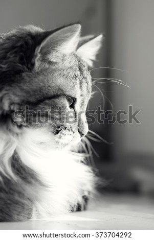 black and white portrait of a cat on a window sill