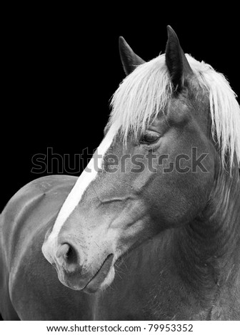 black and white portrait of a horse