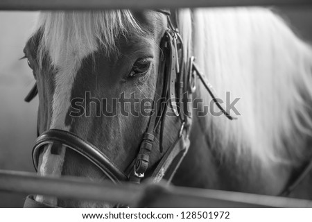 Black and white portrait of horse in stable, detail of eyes