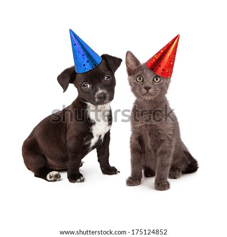 Black and white puppy and a gray kitten sitting together wearing festive party hats - stock photo