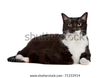 black and white short haired cat - stock photo