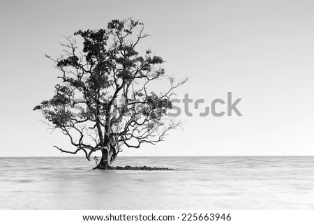 Black and white shot of a lone tree partially submerged in the sea, Thailand - stock photo
