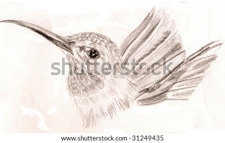 Black and white sketch of a hummingbird, looking proudly to one side - stock photo