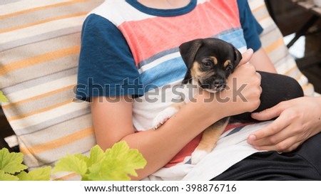 Black and White Small Breed Puppy Wrapped in Towel After Taking a Bath - stock photo