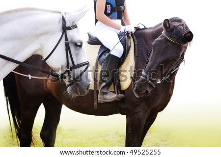Black and white sporting horses - stock photo