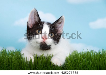 black and white tabby kitten laying in long grass with blue background white fulffy clouds